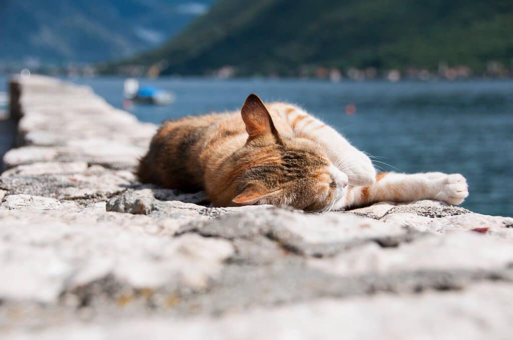 Kot w Czarnogórze